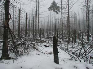 Holzwurm Co Tierische Holzschadlinge Zusammenhange Bestimmung