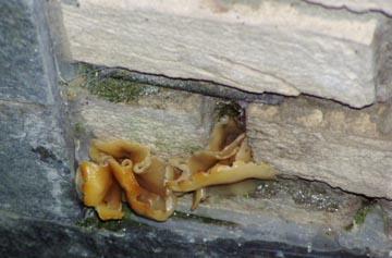 Die Vielfalt holzzerstörender Pilze