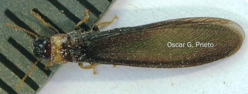 Fliegende Ameisen Im Mauerwerk Latest Beseitigen With