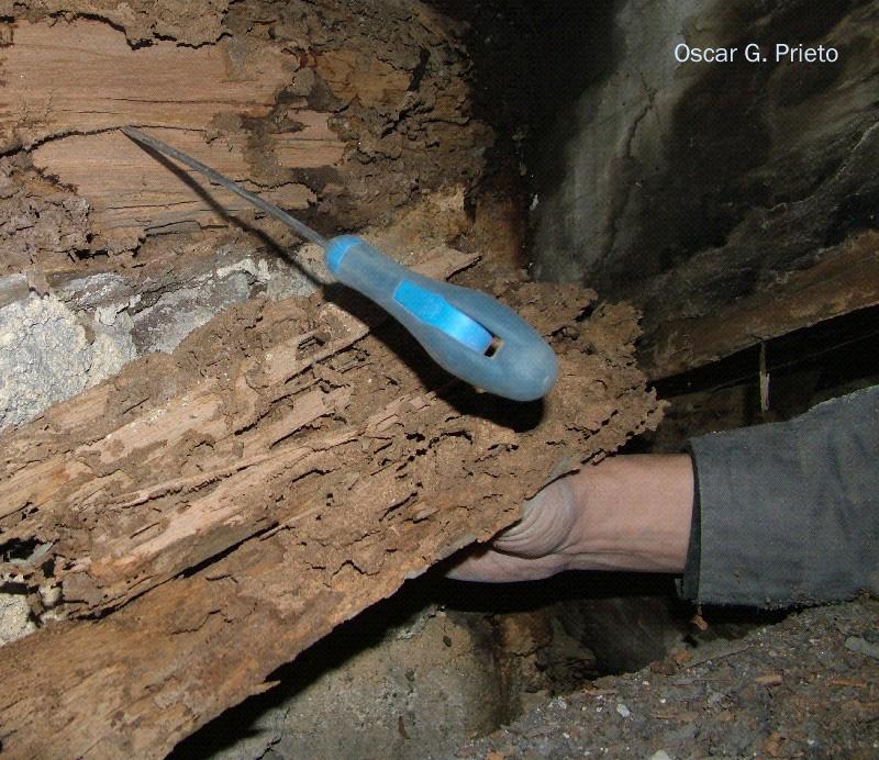 termiten europ ische erdtermiten bodentermiten der. Black Bedroom Furniture Sets. Home Design Ideas
